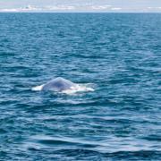 Northsailing - Island - Iceland - Blauwal