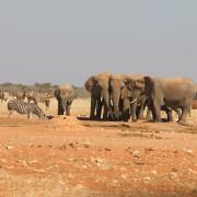 Elefanten am Ratteldraf Wasserloch