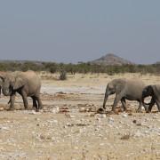 Elefanten am Klippen Wasserloch - Etoscha Nationalpark