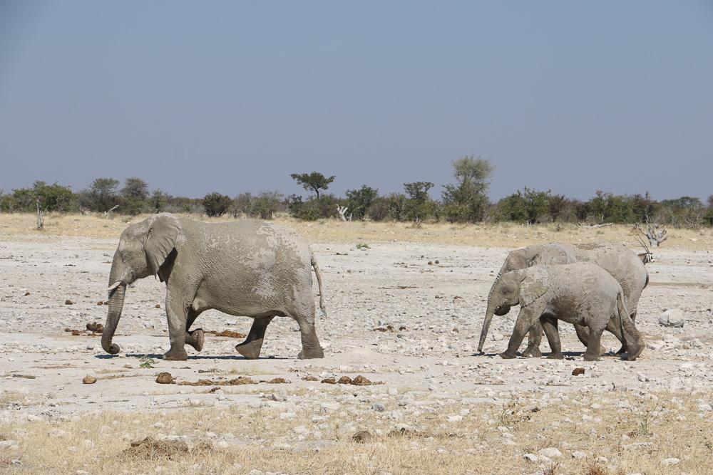 Elefanten am Klippan Wasserloch im Etosha Nationalpark