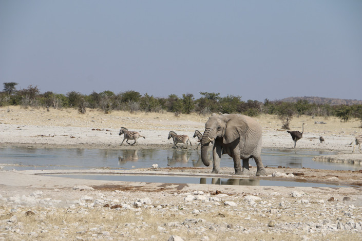 Wilde Tiere im Etosha Nationalpark - Selbstfahrer Safari im westlichen Etosha Nationalpark