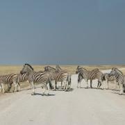 Zebrastreifen im Etosha Nationalpark