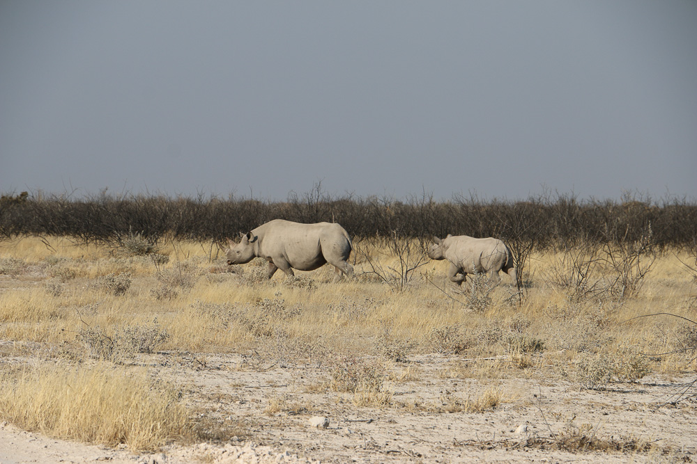 Nashörner im Etosha Nationalpark