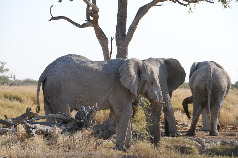 Elefanten am Ngobib Wasserloch im Etosha Nationalpark