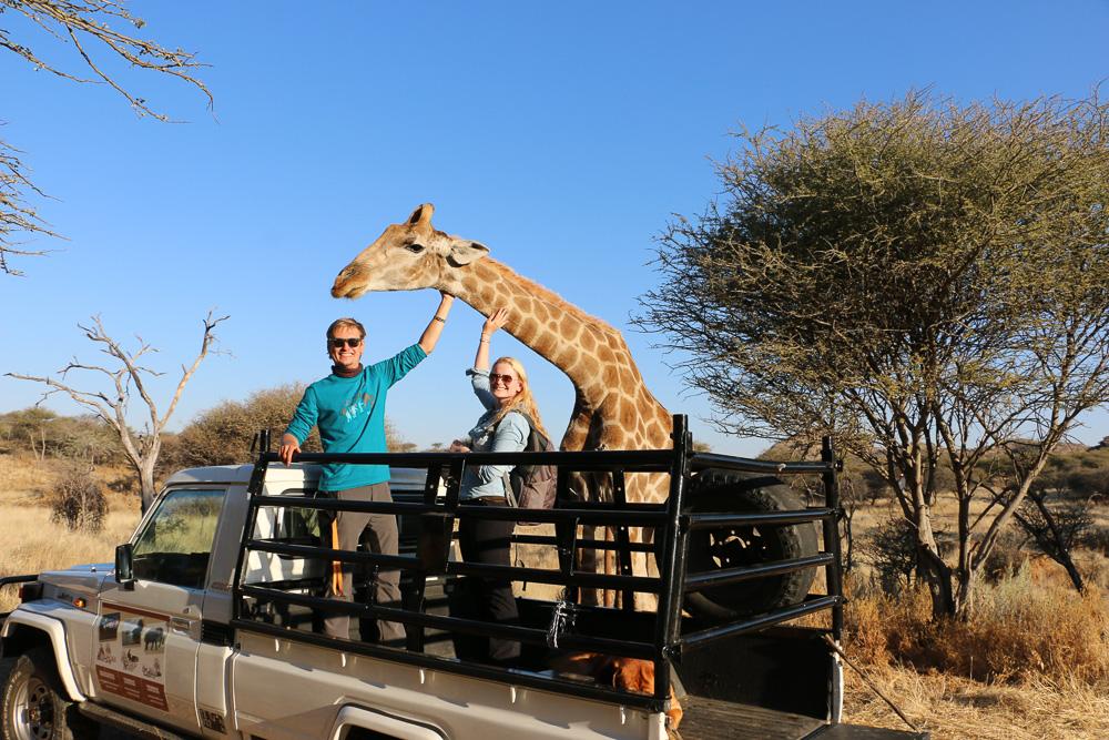Giraffe des Windhoek Game Camps