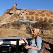 Neugierige Giraffe zum streicheln nah