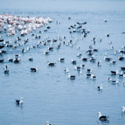 Walvis Bay - Flamingos