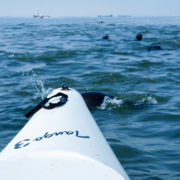 Kayak Tour Walvis Bay - Pelican Point