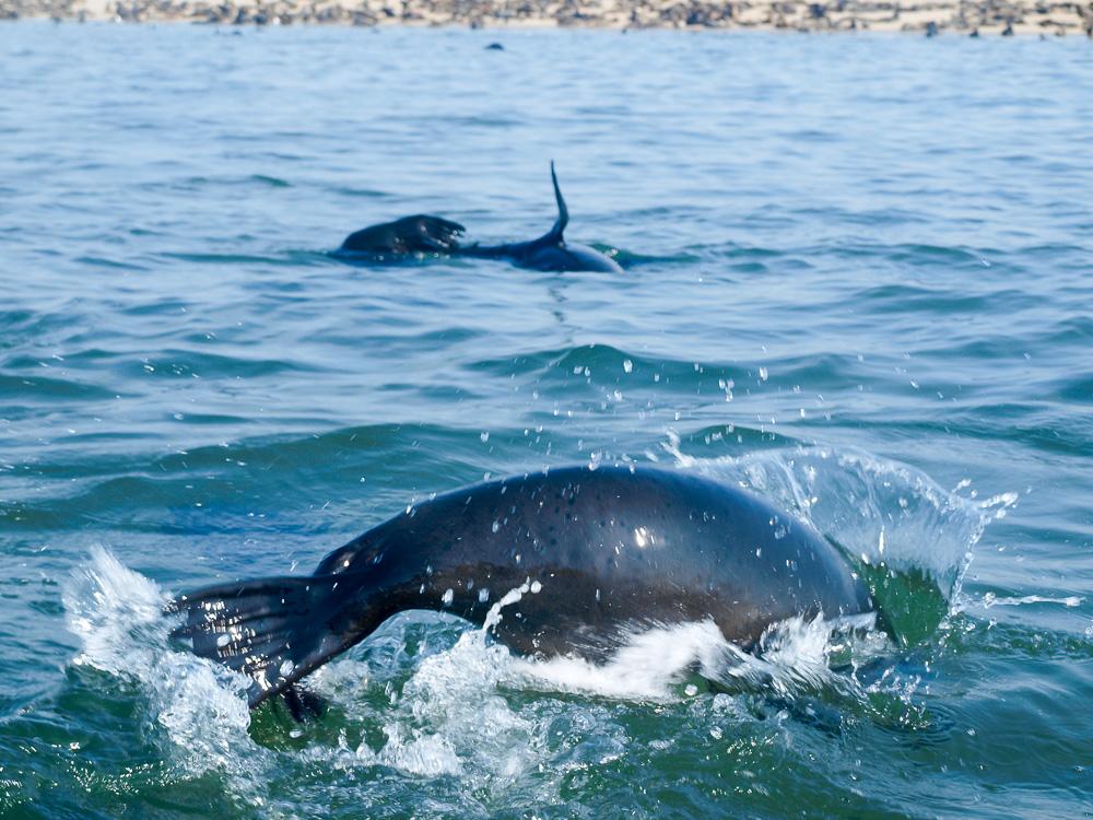 Daten-namibia walvis Bucht Speed-Dating aix