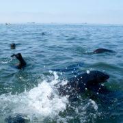 Kayak Tour Walvis Bay - Pelican Point