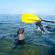Kayak Tour Walvis Bay