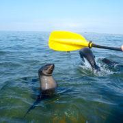 Kayak Tour Walvis Bay