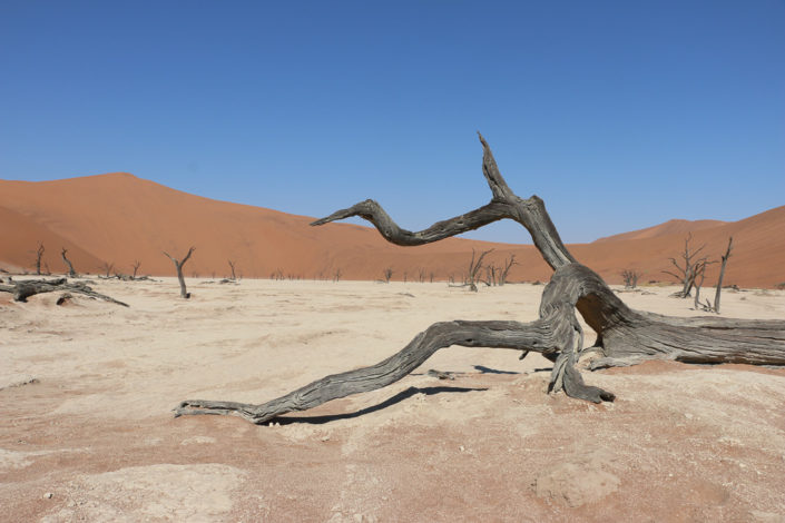 Tolle Fotomotive im Deadvlei