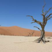 Uralte Bäume im Deadvlei