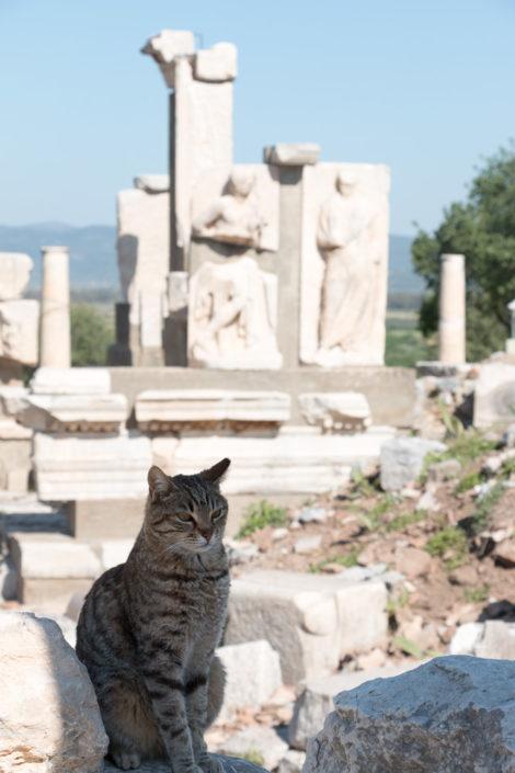 Katzen an jeder Ecke in Ephesus
