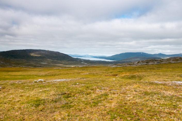 Grüne Wiesen Lappland