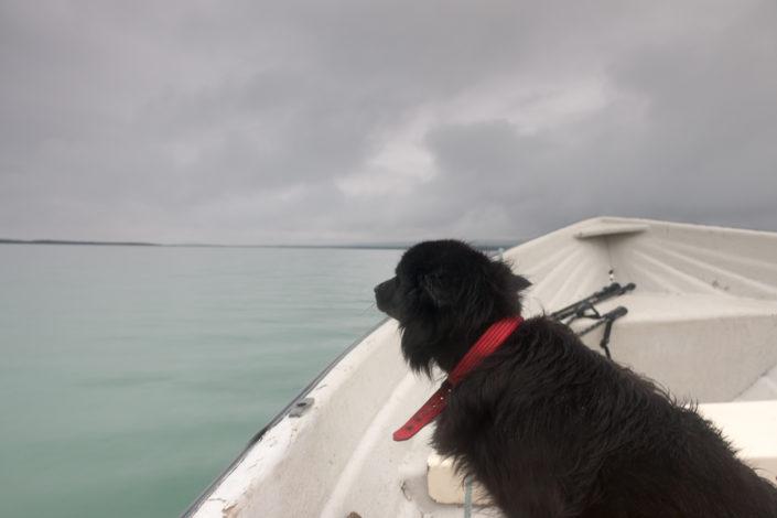 Hund Motorboot Sitojaure