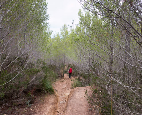 Abstieg vom Pas Vermell nach Sant Elm