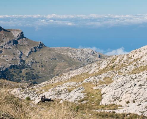 Tramuntana Mallorca
