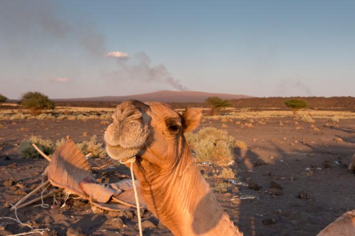 Kamel Erta Ale Vulkan