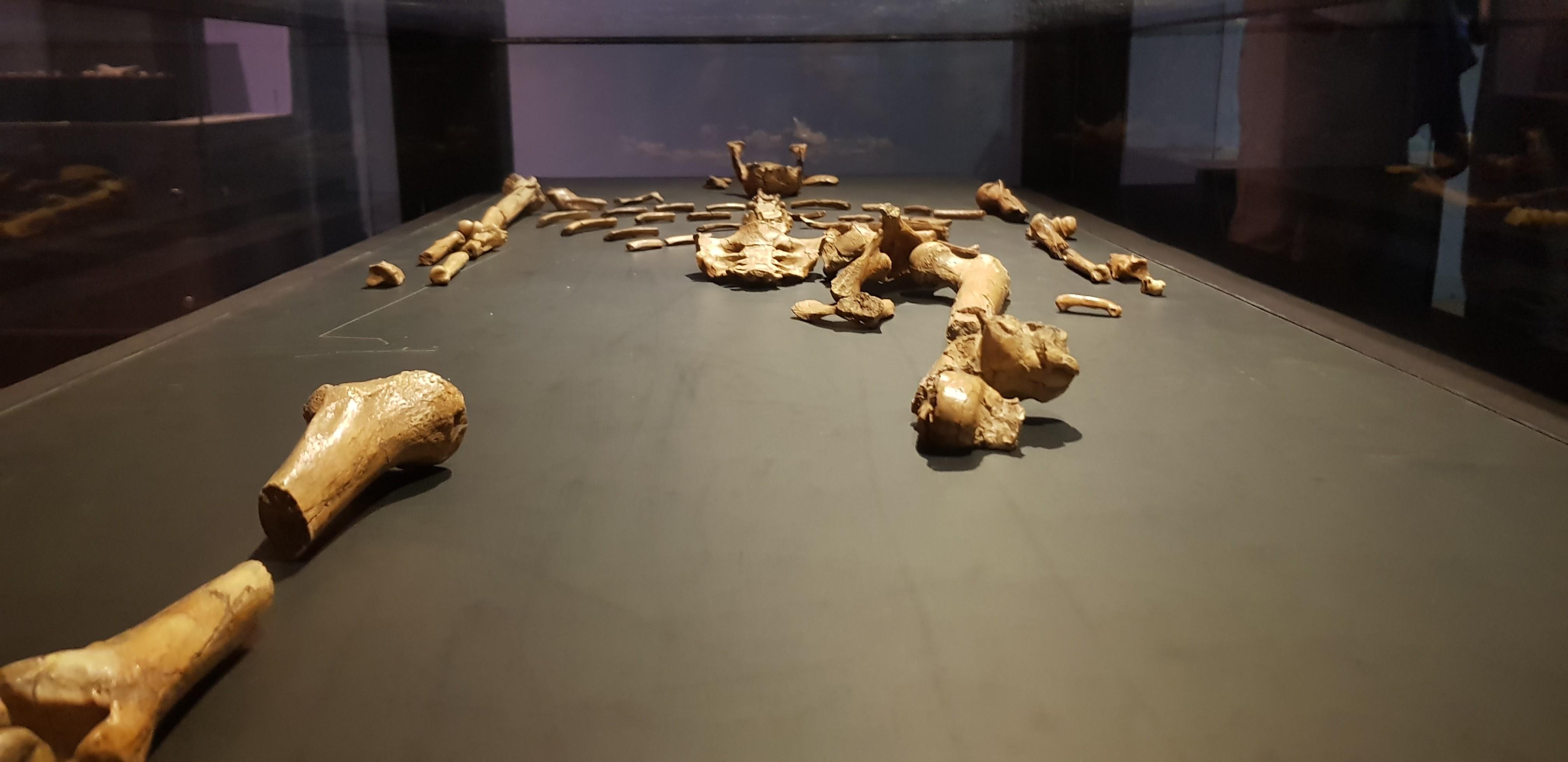 Lucy National Museum Ethiopia