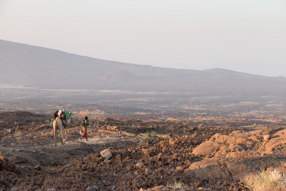 Kamele Abstieg Erta Ale