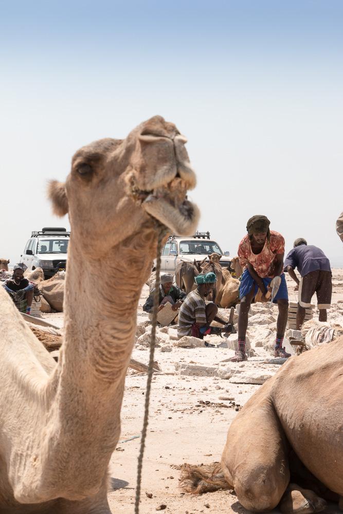 Salzarbeitern in der Danakil