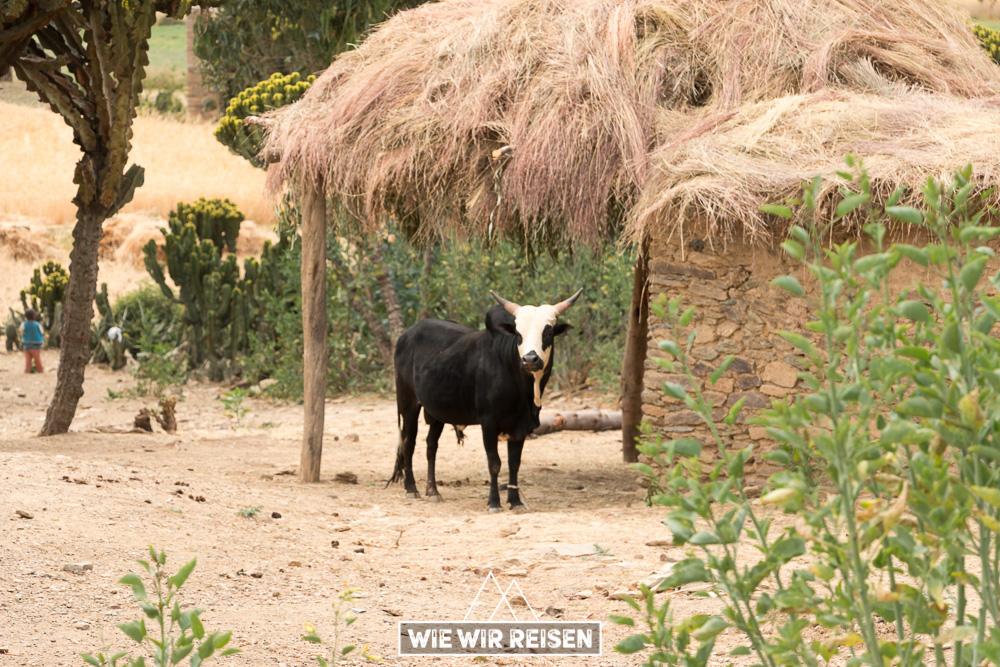 Bauernhof in der Tigray Region