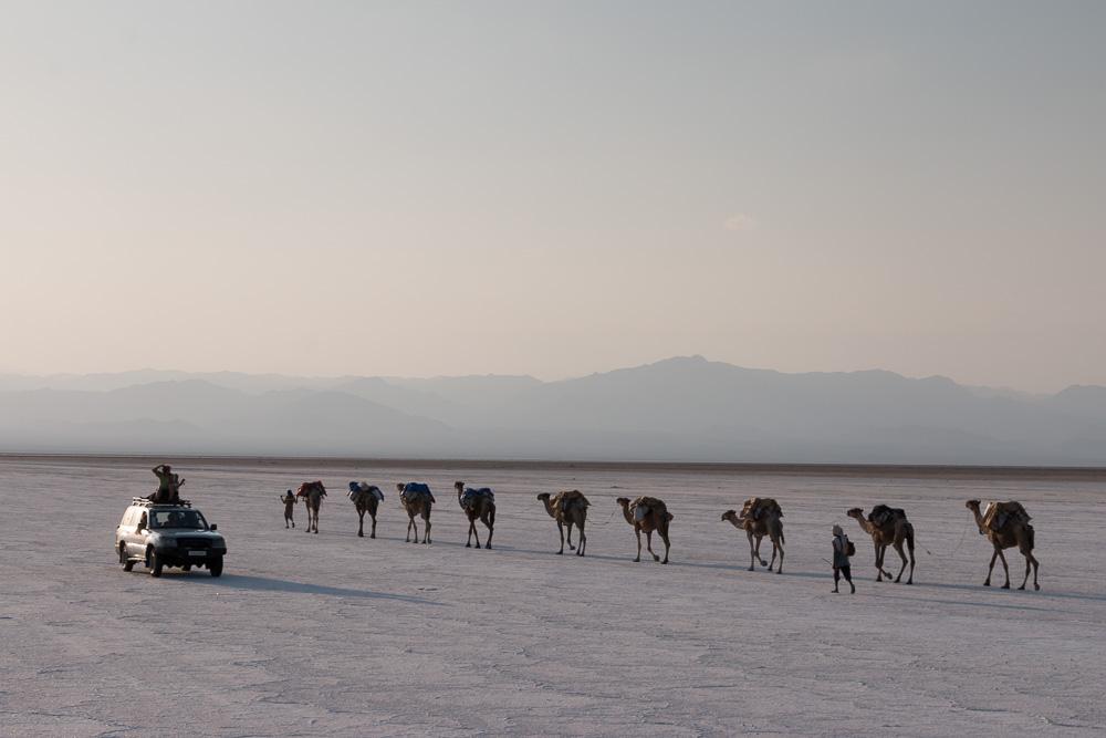 Wir passieren auf dem Weg zu Ass-Ale Salzsee eine von vielen Kamelkarawanen der Afar