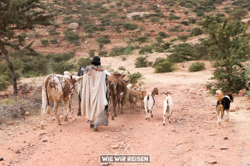 Hirtin mit Tieren in Gheralta