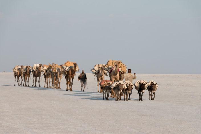 Kamel Karawanen Danakil