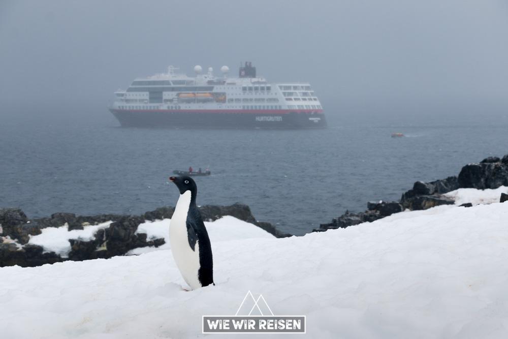 Adele Pinguin auf Halfmoon Island