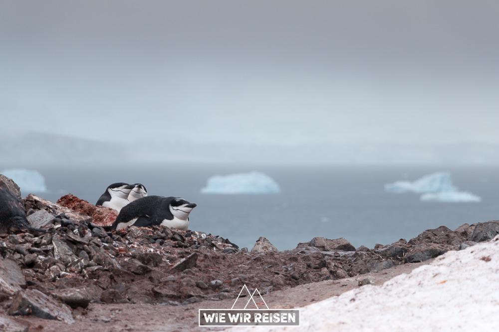 Halfmoon Island Reisebericht
