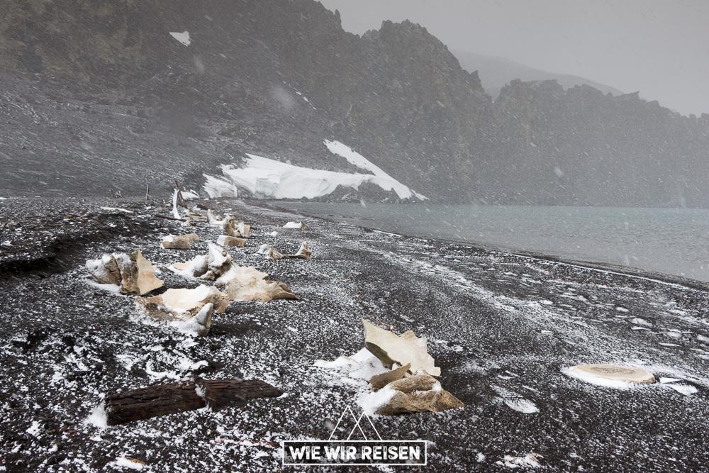 Wal Knochen am Strand von Whalers bay