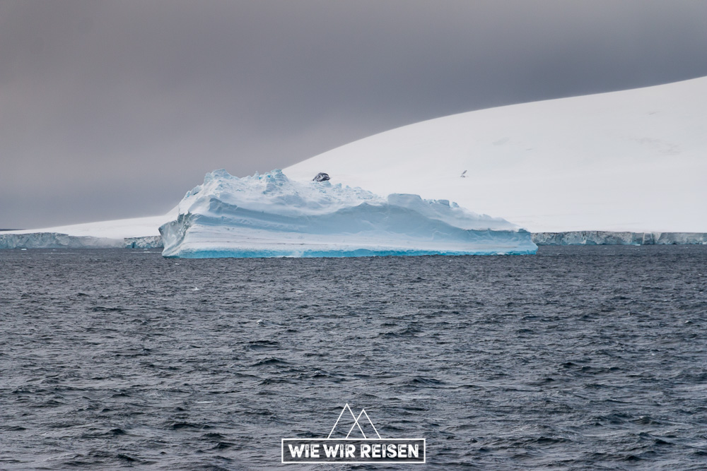 Eisberg im Antarctic Sound