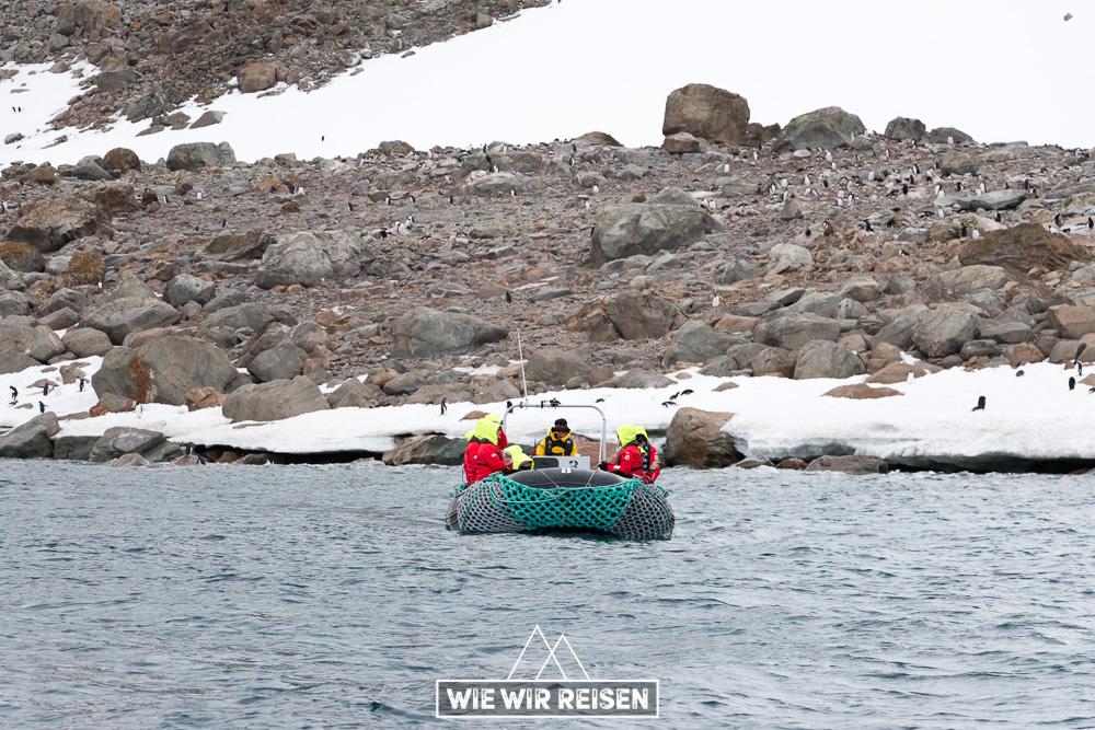 Cruisen mit den Zodiacs zu einer Adelie Pinguin Kolonie