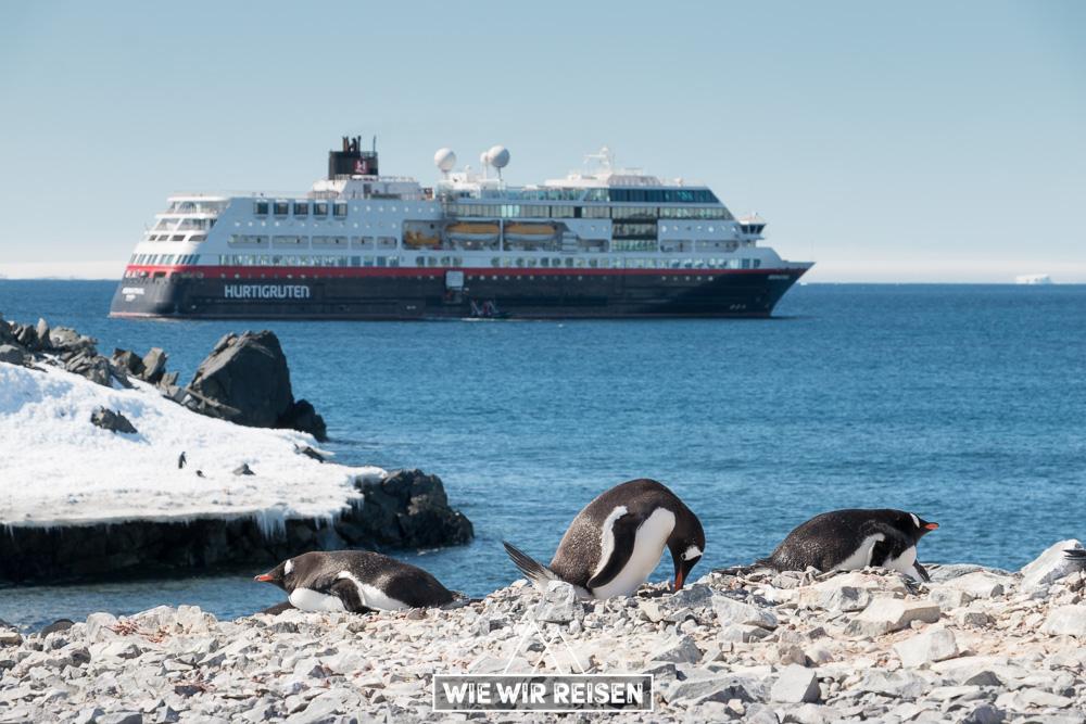 Eselspinguine am Strand von Hope Bay mit der MS Midnatsol im Hintergrund