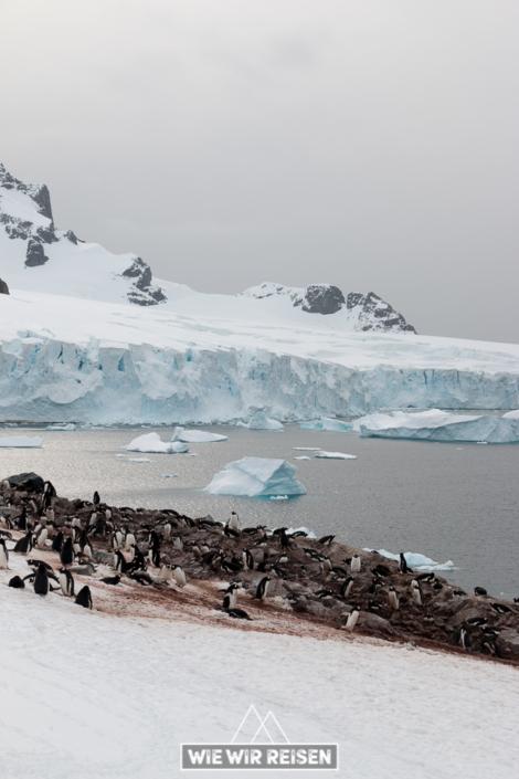 Eselspinguinkolonie Cuverville Island Antarktis