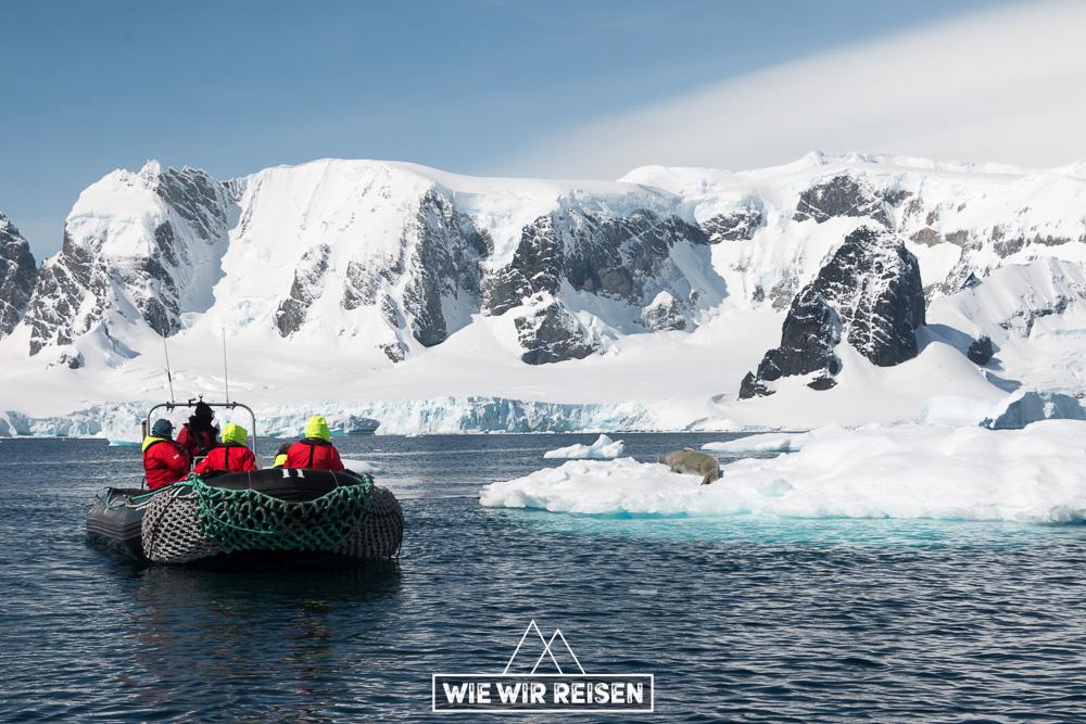 Zodiac cruised nah an eine Robbe in der Antartkis