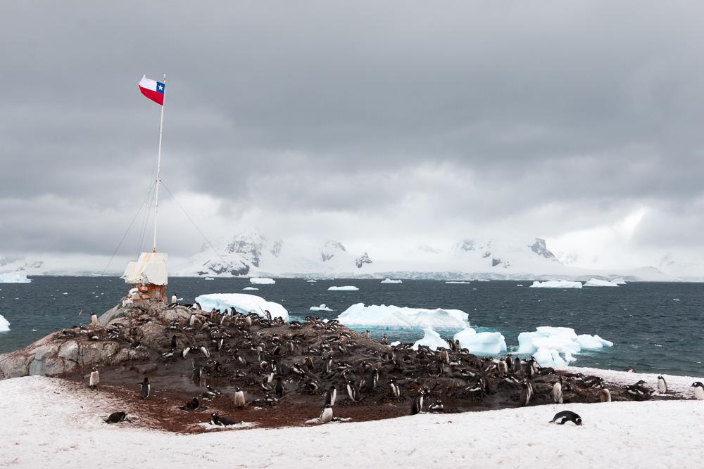 Chilenische Flagge mit Pinguinkolonie auf der Antarktis Station Gonzales Videla