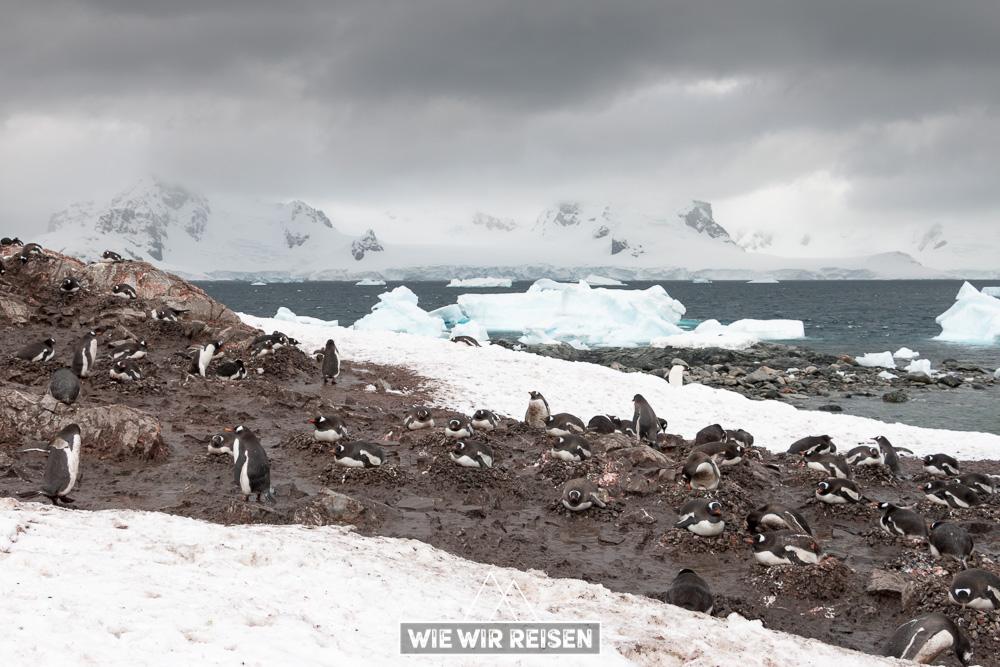Pinguin Kolonie bei der Station Gonzales Videla in der Antarktis